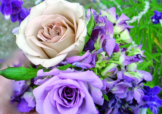 and copper colored roses lavender hydrangea and Russian purple sage