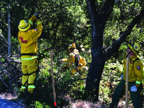 Lafayette portion of North Orinda Shaded Fuel Break completed